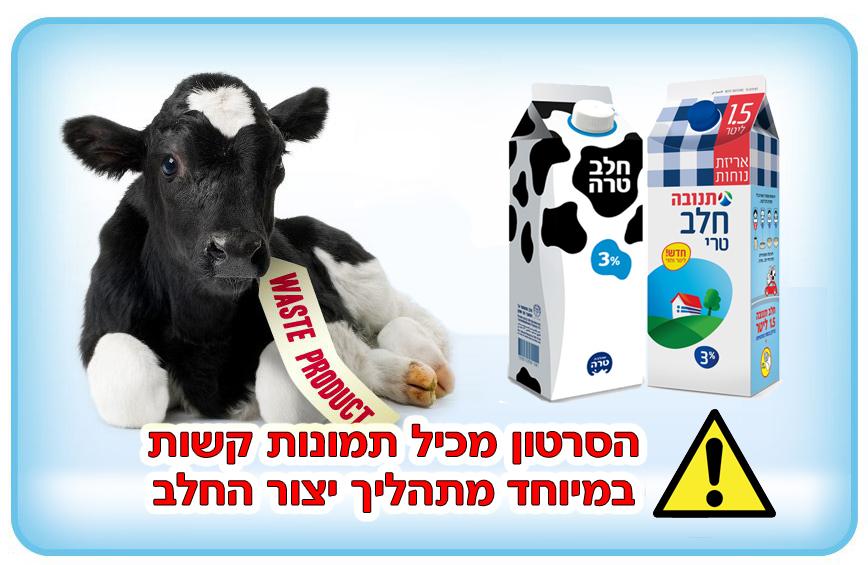 שחיטת פרות בהריון